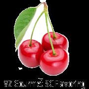 VZ SC Sweet Cherry Gourmet Flavoring